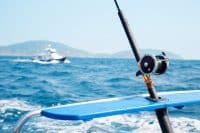 What Fish Do You Catch in Cabo